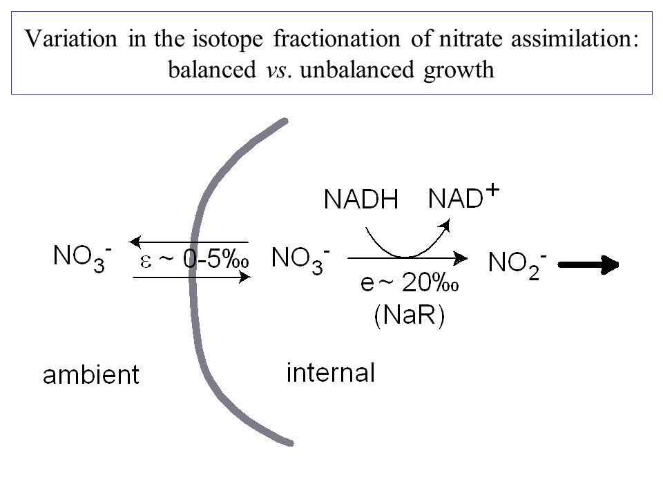 Variation in the isotope fractionation of nitrate assimilation: balanced vs. unbalanced growth