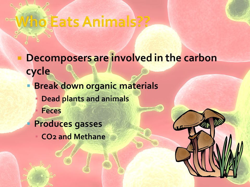  Decomposers are involved in the carbon cycle  Break down organic materials ▪ Dead plants and animals ▪ Feces  Produces gasses ▪ CO2 and Methane