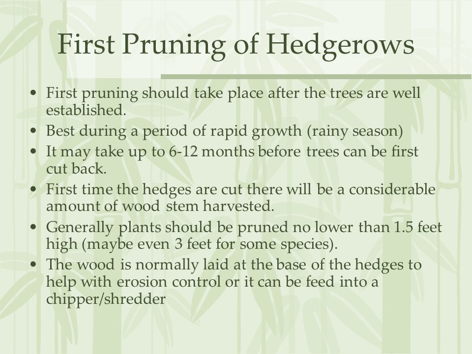 First Pruning of Hedgerows First pruning should take place after the trees are well established.