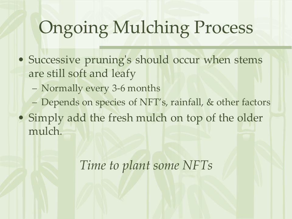 Ongoing Mulching Process Successive pruning s should occur when stems are still soft and leafy –Normally every 3-6 months –Depends on species of NFT's, rainfall, & other factors Simply add the fresh mulch on top of the older mulch.
