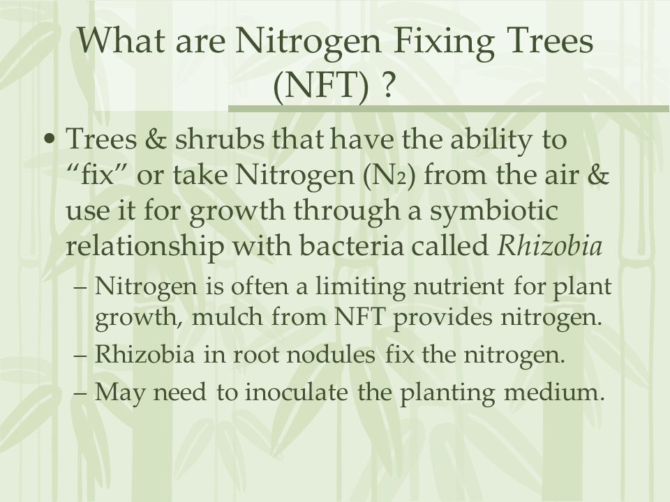 What are Nitrogen Fixing Trees (NFT) .