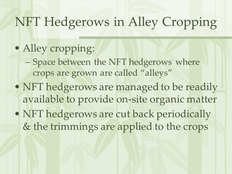 NFT Hedgerows in Alley Cropping Alley cropping: –Space between the NFT hedgerows where crops are grown are called alleys NFT hedgerows are managed to be readily available to provide on-site organic matter NFT hedgerows are cut back periodically & the trimmings are applied to the crops