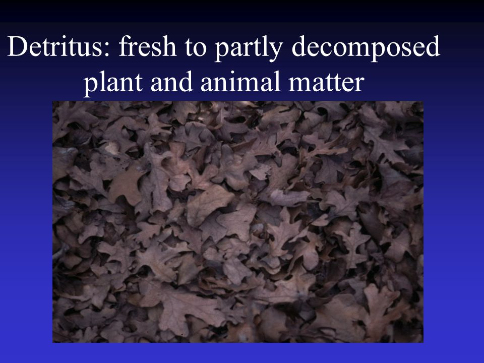 Detritus: fresh to partly decomposed plant and animal matter