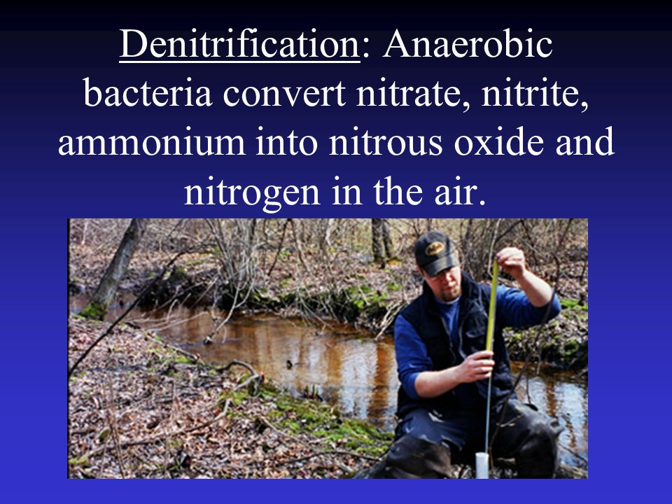 Denitrification: Anaerobic bacteria convert nitrate, nitrite, ammonium into nitrous oxide and nitrogen in the air.