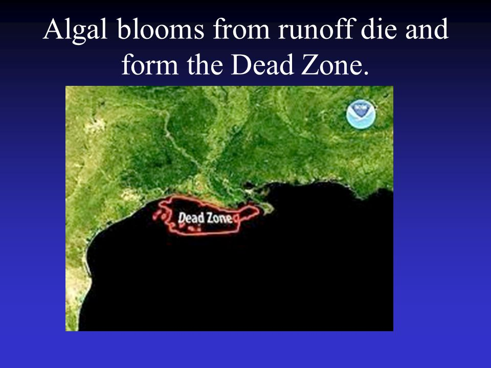Algal blooms from runoff die and form the Dead Zone.