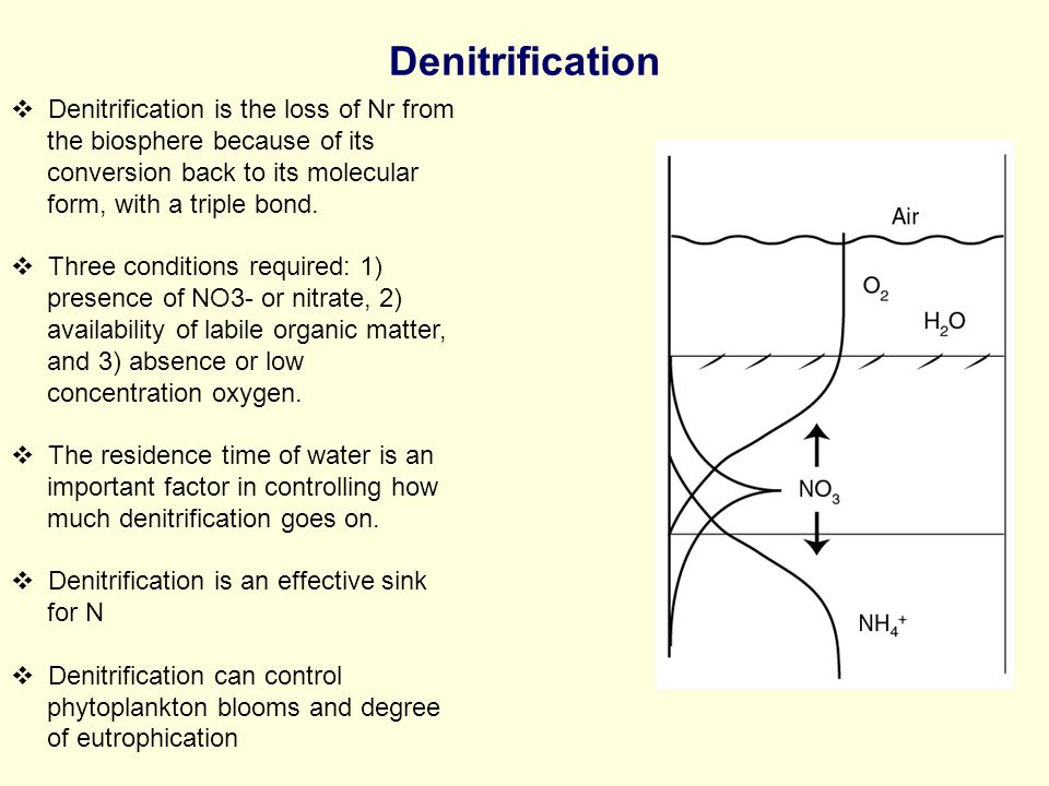  Denitrification is the loss of Nr from the biosphere because of its conversion back to its molecular form, with a triple bond.
