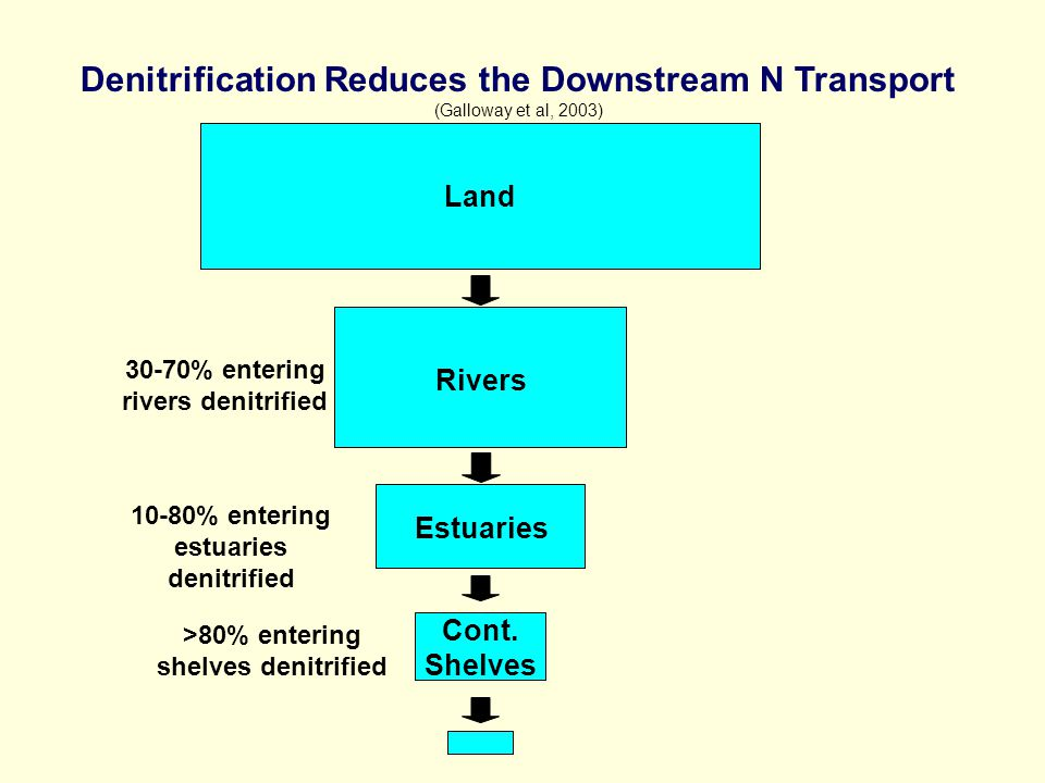 Land Rivers Denitrification Reduces the Downstream N Transport (Galloway et al, 2003) 30-70% entering rivers denitrified Cont.