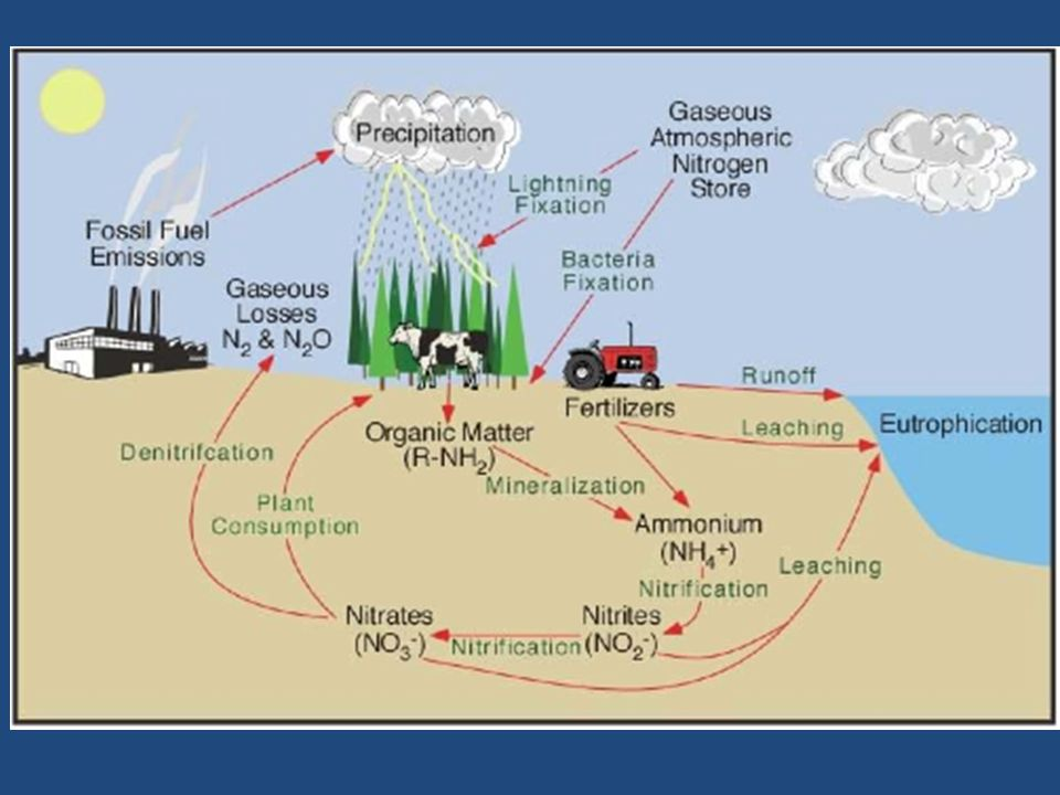 Although we are surrounded by nitrogen gas, and organisms need nitrogen to live, most organisms cannot use the nitrogen gas (N2) found in the air.