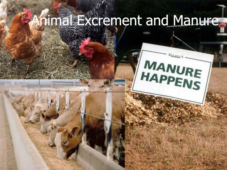 Animal Excrement and Manure