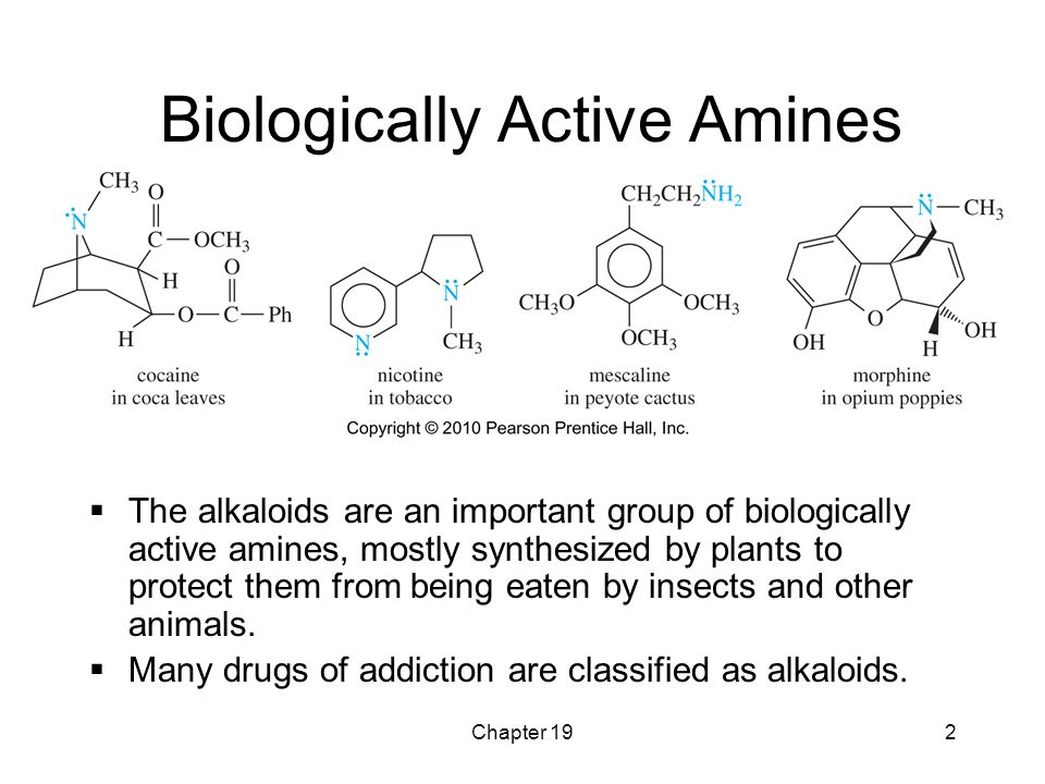 Chapter 192 Biologically Active Amines  The alkaloids are an important group of biologically active amines, mostly synthesized by plants to protect t