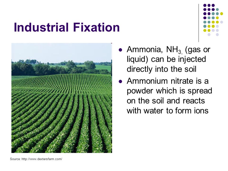 Industrial Fixation Ammonia, NH 3, (gas or liquid) can be injected directly into the soil Ammonium nitrate is a powder which is spread on the soil and reacts with water to form ions Source: http://www.dextersfarm.com/
