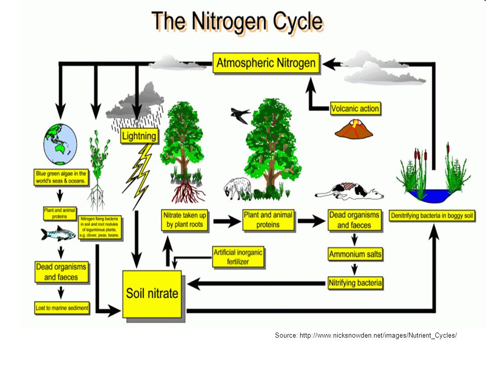 Nitrogen Fixation Large amounts of energy are required to convert N 2 into a more usable form, such as: ammonium ions (NH 4 + ) or nitrate ions (NO 3 - ) This process is called fixing Three processes are responsible for the majority of nitrogen fixation in the biosphere:  Atmospheric fixation  Biological fixation  Industrial fixation