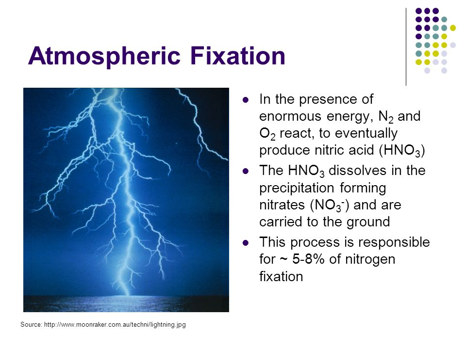 Atmospheric Fixation In the presence of enormous energy, N 2 and O 2 react, to eventually produce nitric acid (HNO 3 ) The HNO 3 dissolves in the precipitation forming nitrates (NO 3 - ) and are carried to the ground This process is responsible for ~ 5-8% of nitrogen fixation Source: http://www.moonraker.com.au/techni/lightning.jpg