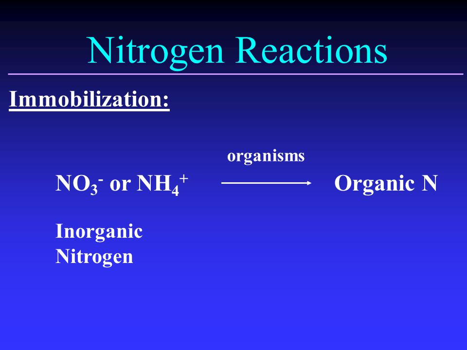 Nitrogen Reactions Immobilization: NO 3 - or NH 4 + Organic N Inorganic Nitrogen organisms