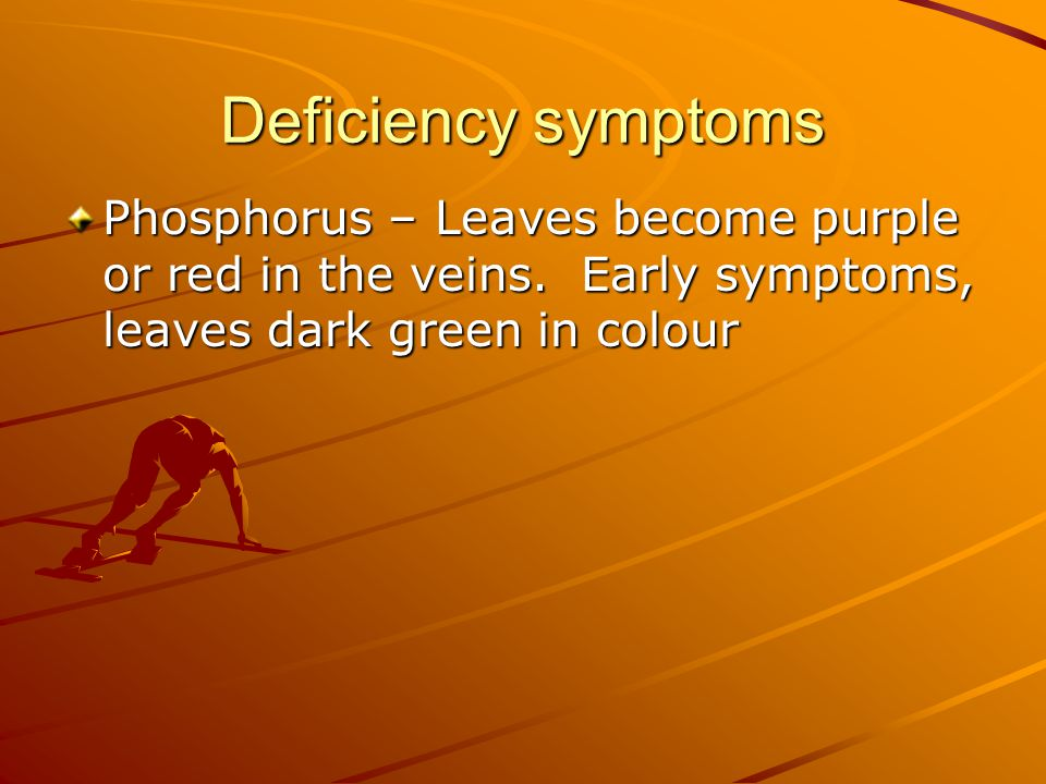 PHOSPHORUS DEFICIENCY May develop purplish or reddish colour on leaves Premature leaf loss Poor root development Delayed maturity Decreased yield Rice plant under P-deficiency, stunted with limited tillers, narrow, short, erect and dirty dark green leaves.
