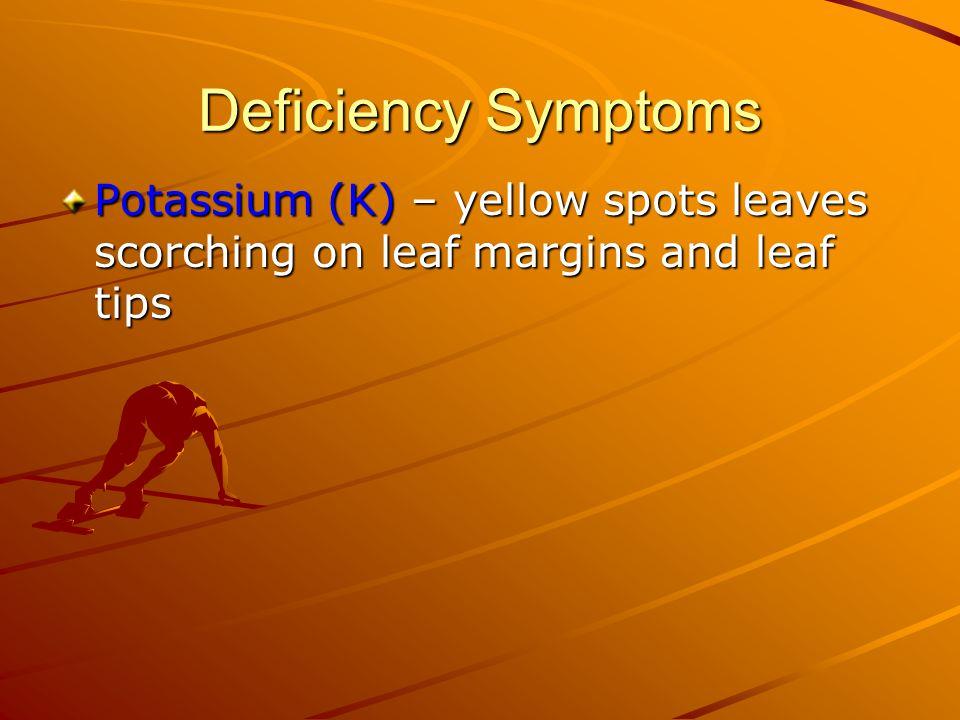 K deficiency in maize K deficiency in riceK deficiency in alfalfa K deficiency in maize