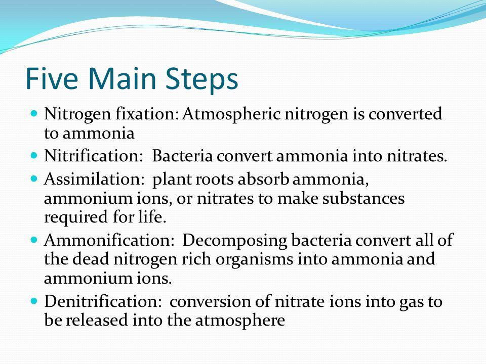 Five Main Steps Nitrogen fixation: Atmospheric nitrogen is converted to ammonia Nitrification: Bacteria convert ammonia into nitrates.