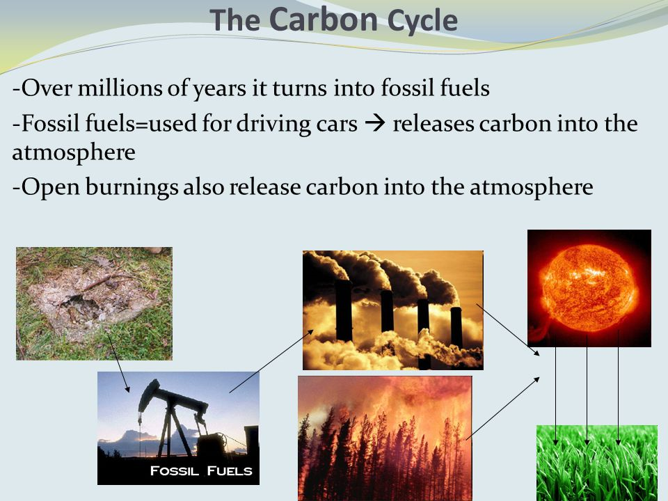 -Over millions of years it turns into fossil fuels -Fossil fuels=used for driving cars  releases carbon into the atmosphere -Open burnings also release carbon into the atmosphere