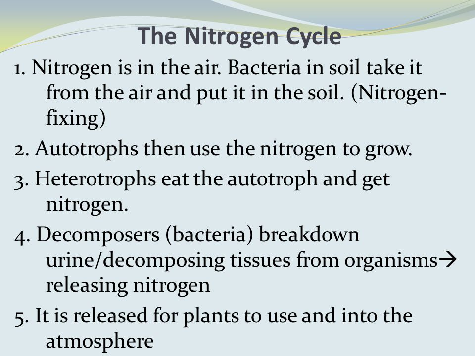 The Nitrogen Cycle 1. Nitrogen is in the air.