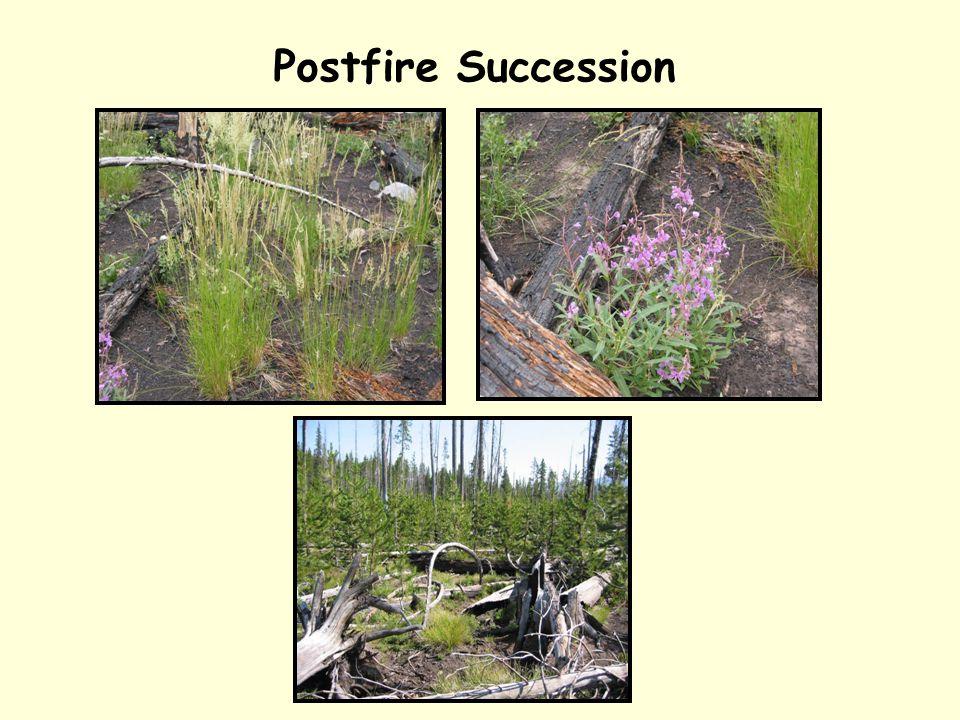 Postfire Succession