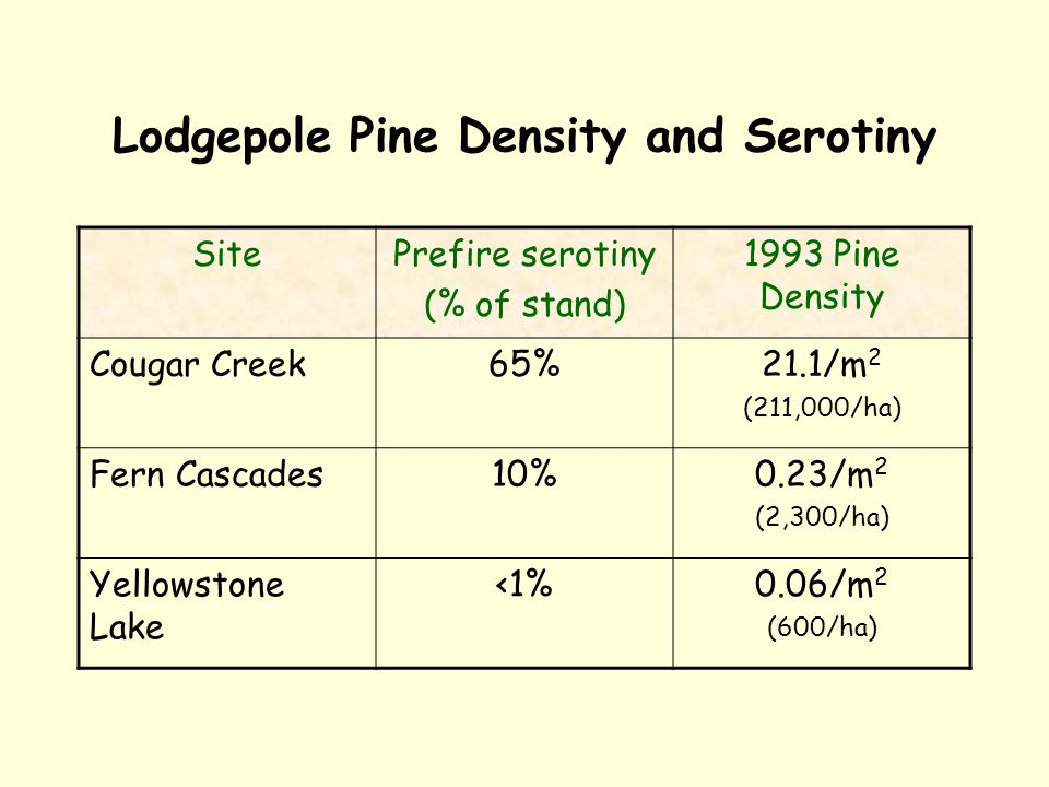 Lodgepole Pine Density and Serotiny SitePrefire serotiny (% of stand) 1993 Pine Density Cougar Creek65%21.1/m 2 (211,000/ha) Fern Cascades10%0.23/m 2 (2,300/ha) Yellowstone Lake <1%0.06/m 2 (600/ha)