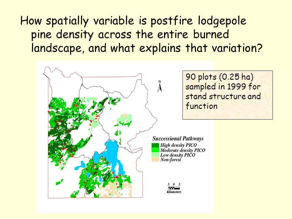 How spatially variable is postfire lodgepole pine density across the entire burned landscape, and what explains that variation.