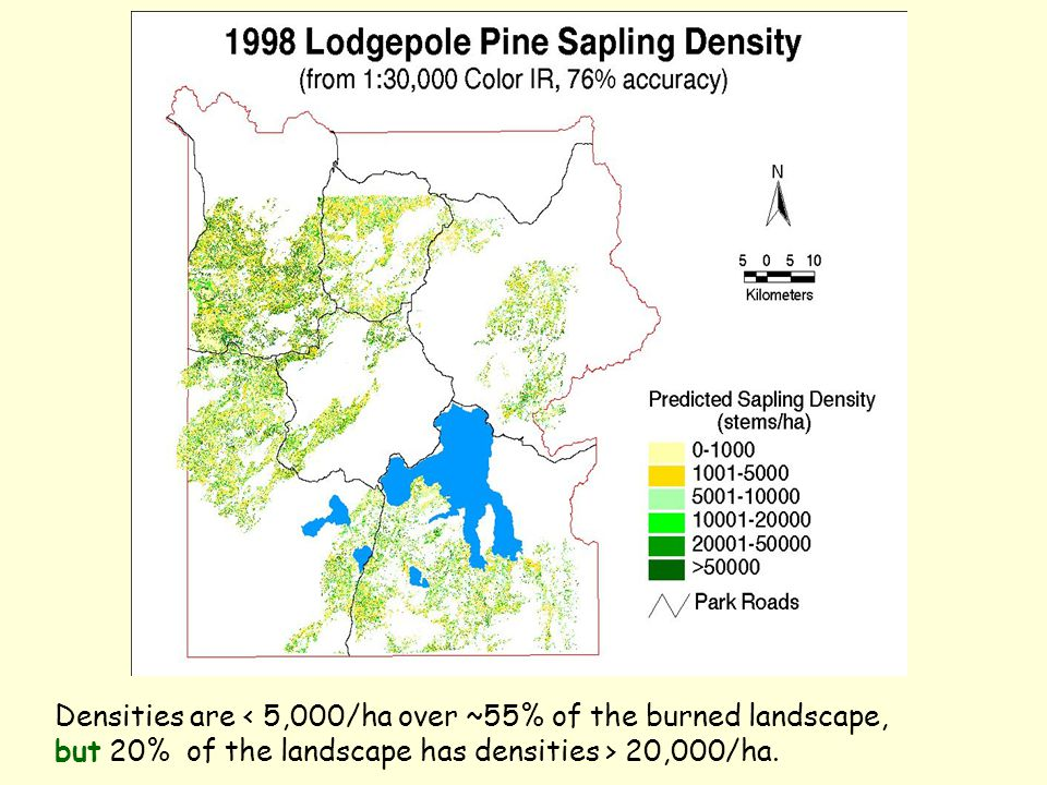 Densities are < 5,000/ha over ~55% of the burned landscape, but 20% of the landscape has densities > 20,000/ha.