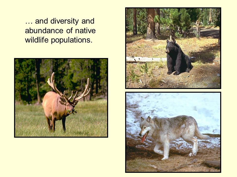 … and diversity and abundance of native wildlife populations.