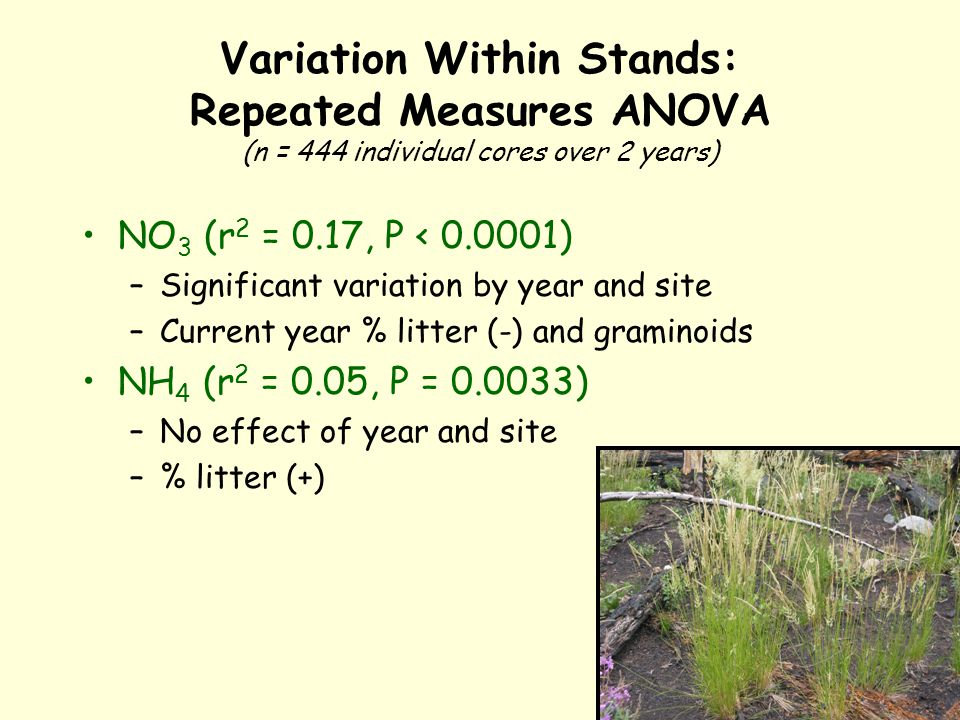 Variation Within Stands: Repeated Measures ANOVA (n = 444 individual cores over 2 years) NO 3 (r 2 = 0.17, P < 0.0001) –Significant variation by year and site –Current year % litter (-) and graminoids NH 4 (r 2 = 0.05, P = 0.0033) –No effect of year and site –% litter (+)