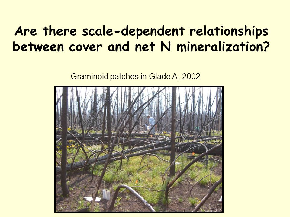 Are there scale-dependent relationships between cover and net N mineralization.