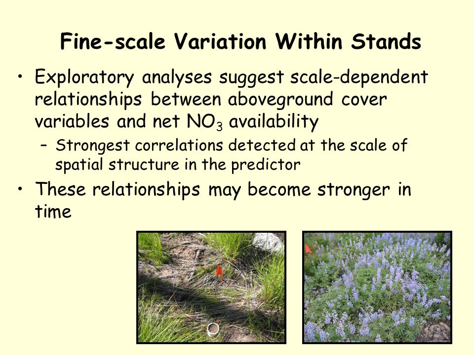 Fine-scale Variation Within Stands Exploratory analyses suggest scale-dependent relationships between aboveground cover variables and net NO 3 availability –Strongest correlations detected at the scale of spatial structure in the predictor These relationships may become stronger in time