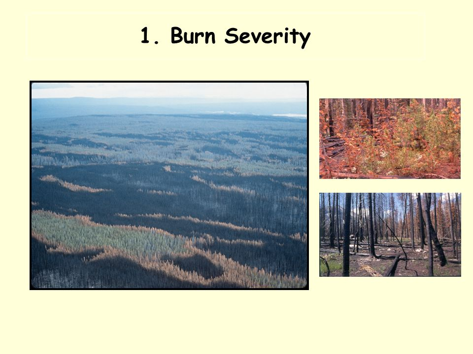Postfire Mosaic of Burn Severity Fire spread largely determined by weather Burned through stands of all age Prefire heterogeneity had some but little influence Historic fire suppression (1945-1972) had little effect