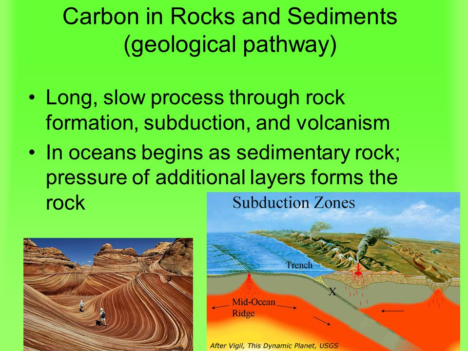 Carbon in Rocks and Sediments (geological pathway) Long, slow process through rock formation, subduction, and volcanism In oceans begins as sedimentary rock; pressure of additional layers forms the rock