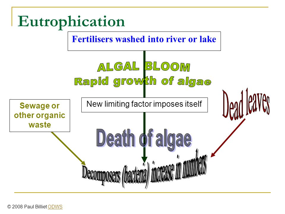Fertilisers washed into river or lake New limiting factor imposes itself Sewage or other organic waste Eutrophication © 2008 Paul Billiet ODWSODWS