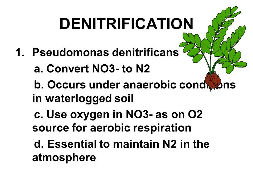 DENITRIFICATION 1.Pseudomonas denitrificans a. Convert NO3- to N2 b.