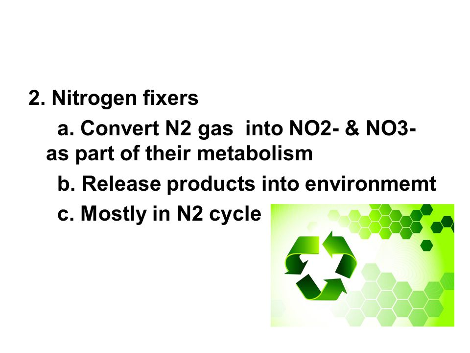2.Nitrogen fixers a. Convert N2 gas into NO2- & NO3- as part of their metabolism b.