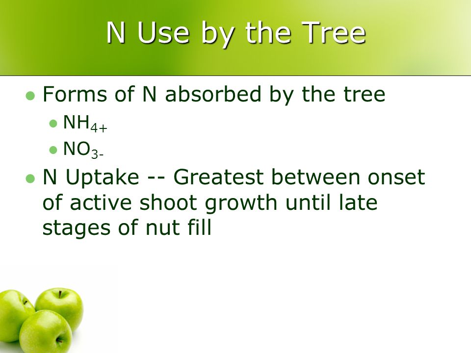 N Use by the Tree Forms of N absorbed by the tree NH 4+ NO 3- N Uptake -- Greatest between onset of active shoot growth until late stages of nut fill