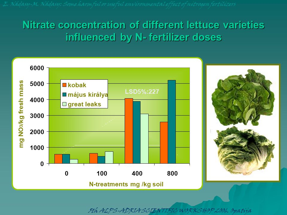 Nitrate concentration of different lettuce varieties influenced by N- fertilizer doses 0 1000 2000 3000 4000 5000 6000 0100400800 N-treatments mg /kg soil mg NO 3 /kg fresh mass kobak május királya great leaks E.