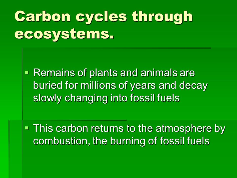 Carbon cycles through ecosystems.