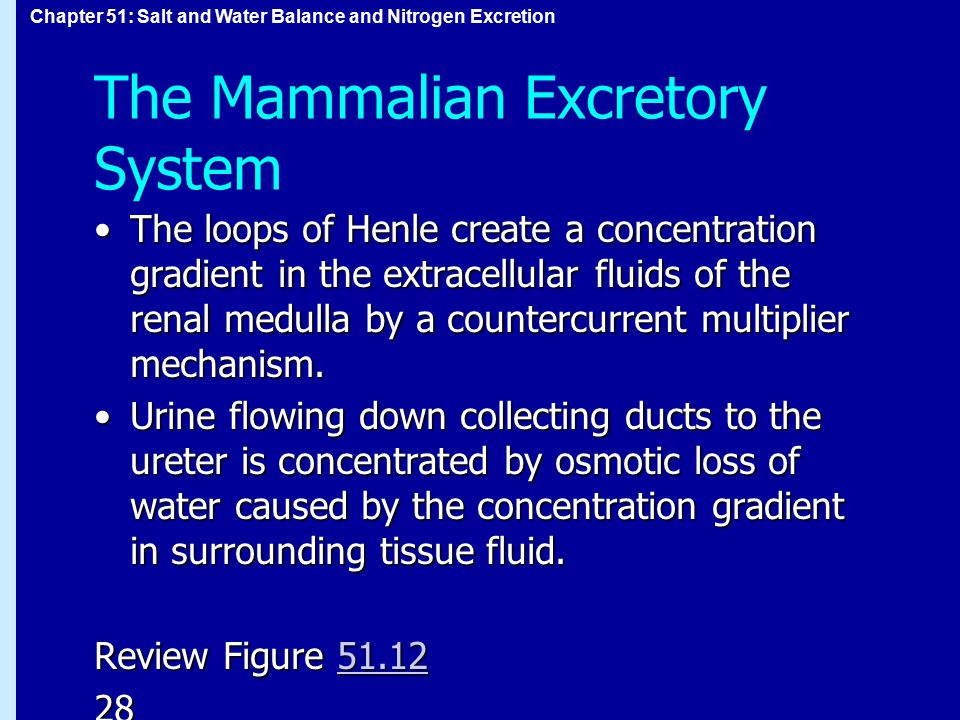 Chapter 51: Salt and Water Balance and Nitrogen Excretion The Mammalian Excretory System The loops of Henle create a concentration gradient in the extracellular fluids of the renal medulla by a countercurrent multiplier mechanism.The loops of Henle create a concentration gradient in the extracellular fluids of the renal medulla by a countercurrent multiplier mechanism.