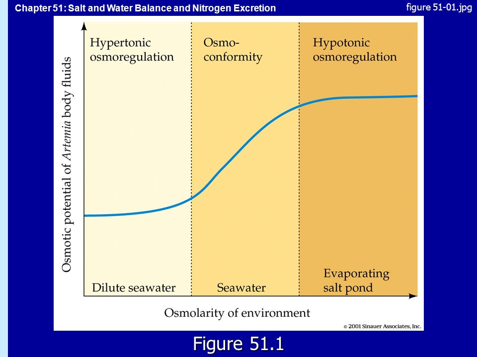 Chapter 51: Salt and Water Balance and Nitrogen Excretion 51.1 Figure 51.1 figure 51-01.jpg
