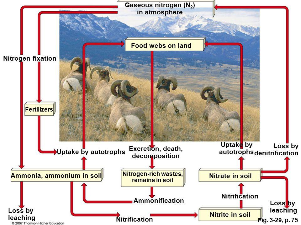 Fig. 3-29, p. 75 Gaseous nitrogen (N 2 ) in atmosphere Ammonia, ammonium in soil Nitrogen-rich wastes, remains in soil Nitrate in soil Loss by leachin