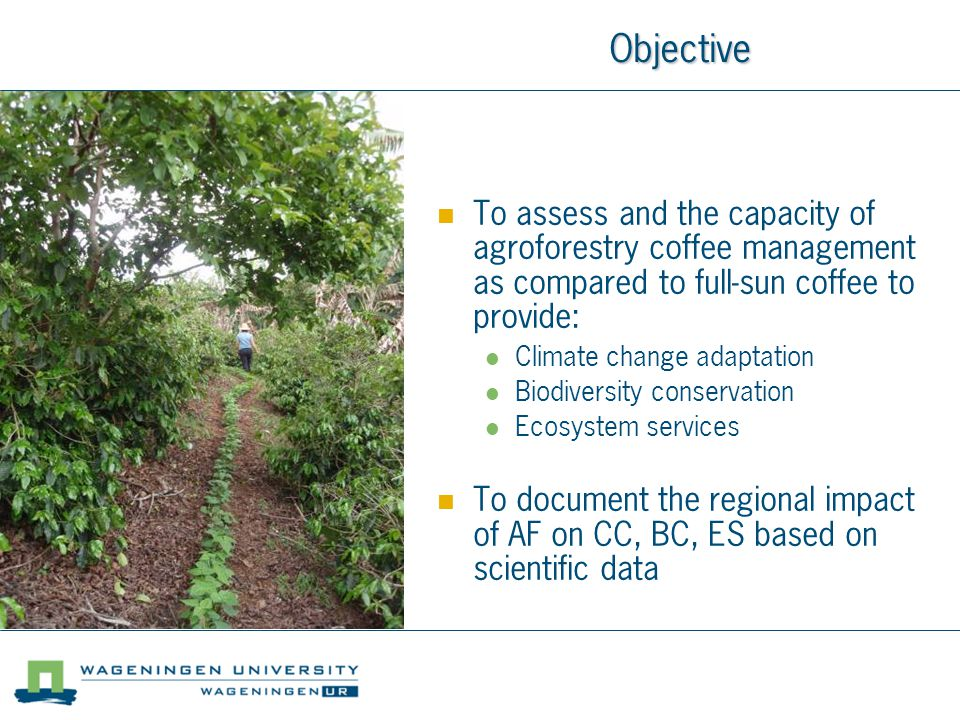 Objective To assess and the capacity of agroforestry coffee management as compared to full-sun coffee to provide: Climate change adaptation Biodiversity conservation Ecosystem services To document the regional impact of AF on CC, BC, ES based on scientific data