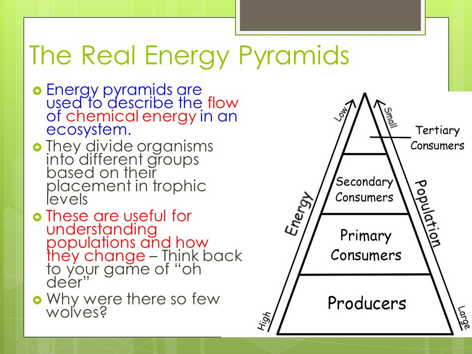 The Real Energy Pyramids  Energy pyramids are used to describe the flow of chemical energy in an ecosystem.