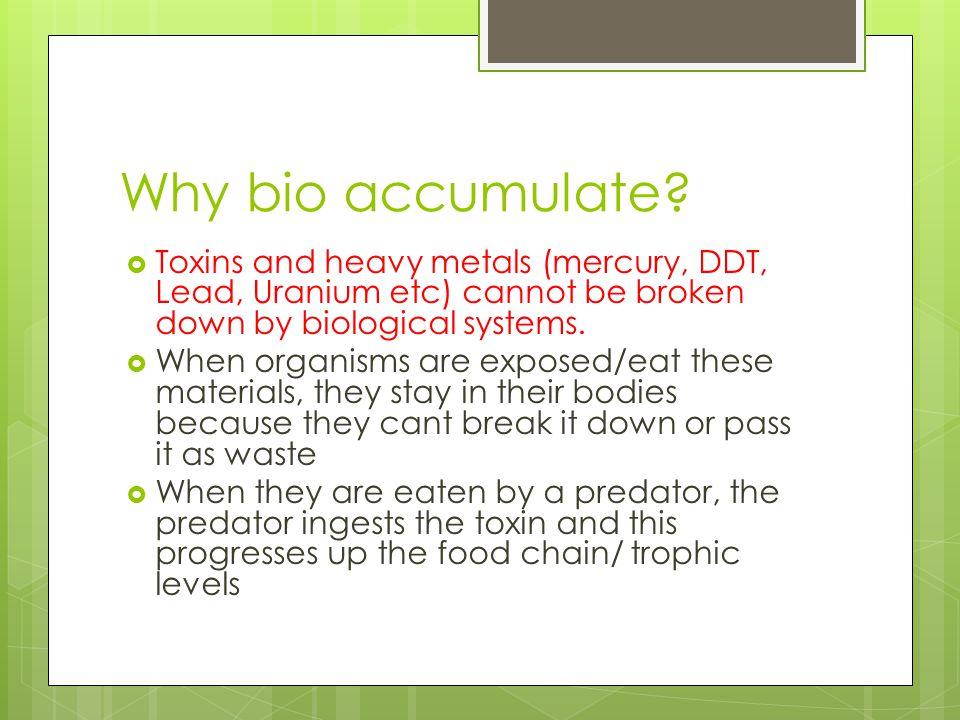 Why bio accumulate.