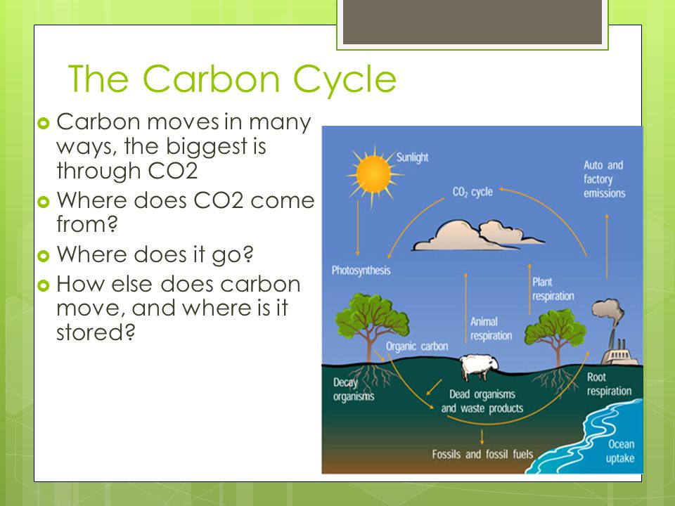 The Carbon Cycle  Carbon moves in many ways, the biggest is through CO2  Where does CO2 come from?  Where does it go?  How else does carbon move,