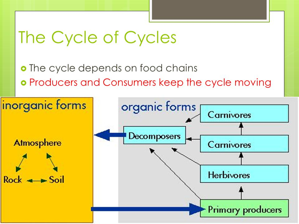 The Cycle of Cycles  The cycle depends on food chains  Producers and Consumers keep the cycle moving