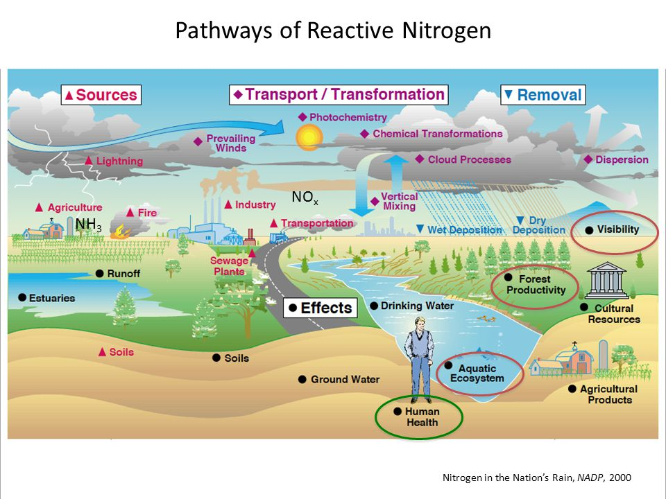 Nitrogen in the Nation's Rain, NADP, 2000 Pathways of Reactive Nitrogen NH 3 NO x