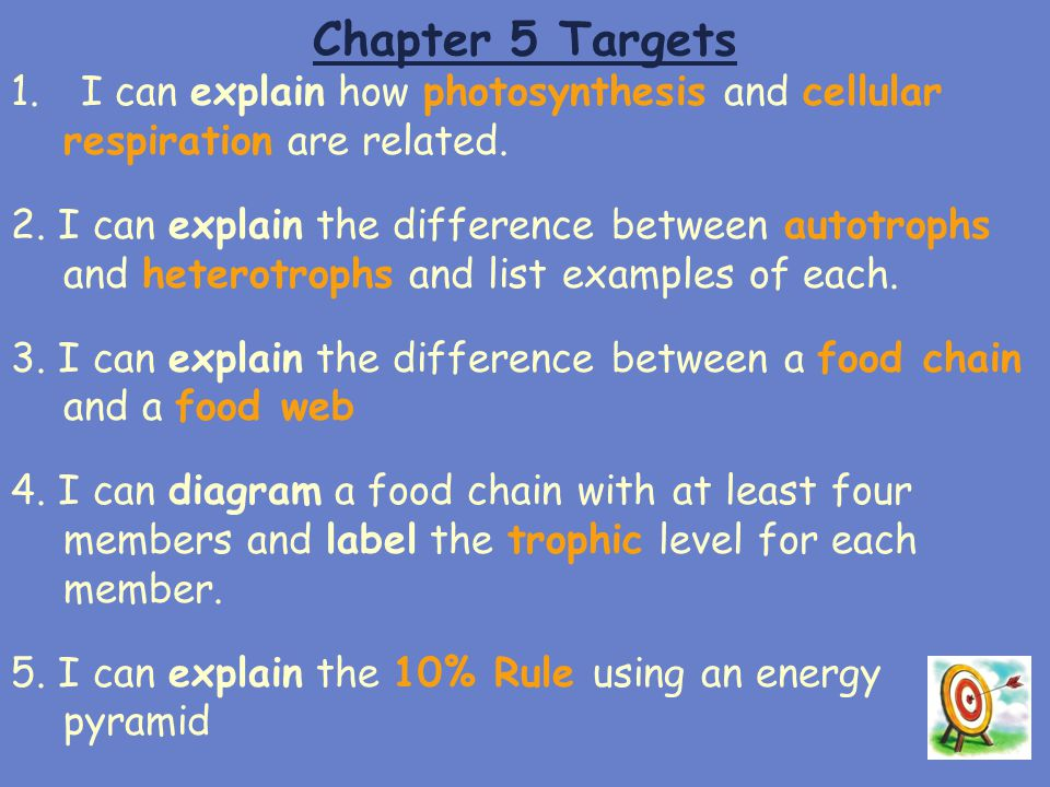 Chapter 5 Targets 1.I can explain how photosynthesis and cellular respiration are related. 2. I can explain the difference between autotrophs and hete