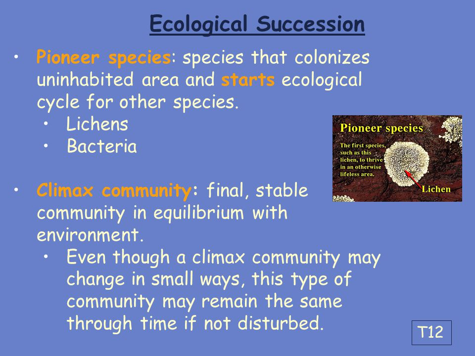 Ecological Succession Pioneer species: species that colonizes uninhabited area and starts ecological cycle for other species. Lichens Bacteria Climax